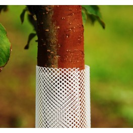 Osłonka do drzewek biała, Ø 6 cm, wysokość 55 cm